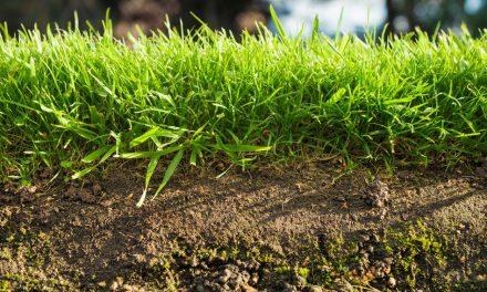 Der Boden – Die Grundlage für unsere Ernährung