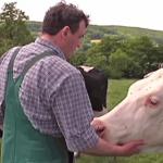 Antonius Tillmann kennt jede seiner Kühe