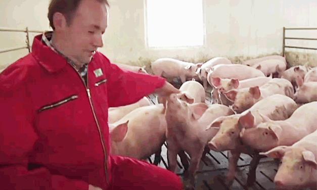 Ich glaub mich zwickt ein Schwein!