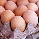 Die Eierkennzeichnung
