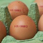 Vorgeschriebene Angaben auf dem Ei