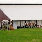 Gedanken zum Tierwohl in der Rinderhaltung